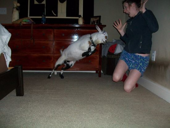 girl attacked by goat
